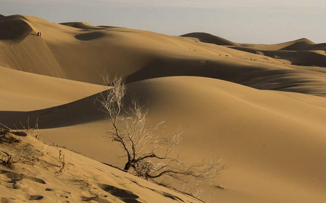 Halvan Desert